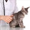 Ветеринарные клиники в Нижней Тавде